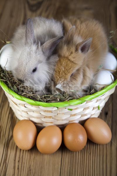 Rabbit in basket with Easter Stock photo © JanPietruszka