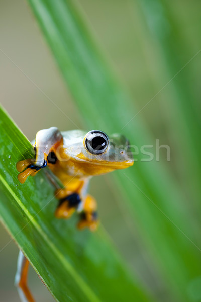 Green tree frog on colorful background Stock photo © JanPietruszka
