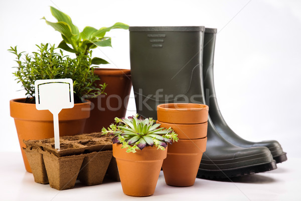 Foto stock: Jardín · brillante · primavera · hierba · naturaleza