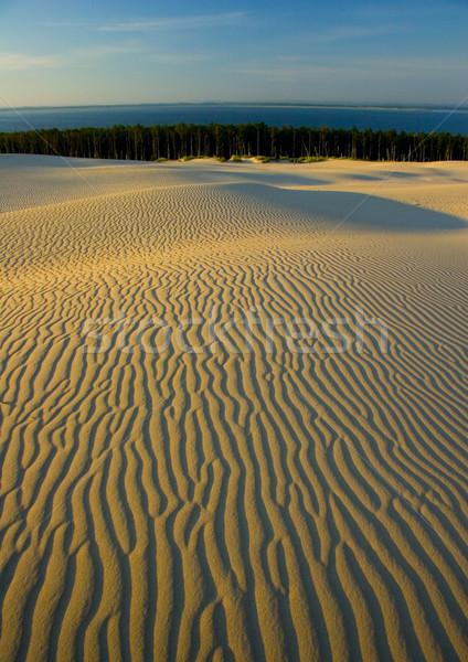 Arena puro naturaleza hermosa paisaje resumen Foto stock © JanPietruszka