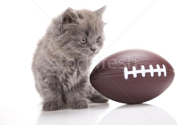 Сток-фото: небольшой · серый · котенка · Cute · ПЭТ · красочный