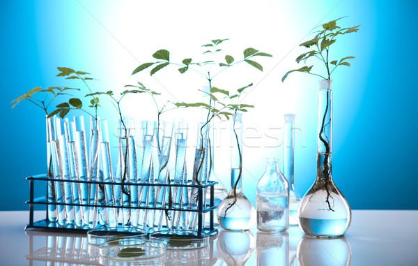 Stok fotoğraf: Eco · laboratuvar · doğa · tıp · bitki · laboratuvar