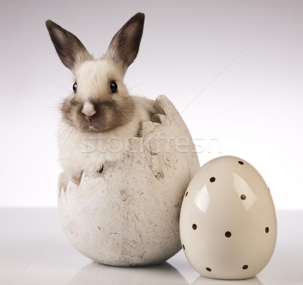 Nyúl fehér kellemes húsvétot húsvét tavasz zöld Stock fotó © JanPietruszka