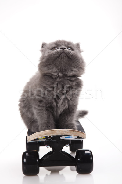 Skateboarding cat, cute pet colorful theme Stock photo © JanPietruszka