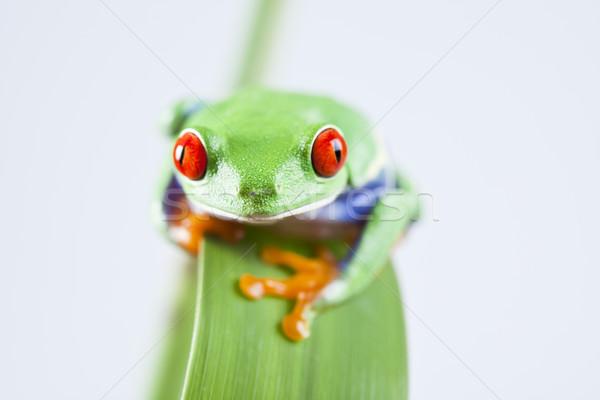 Stock fotó: Piros · béka · zöld · fa · színes · természet · levél