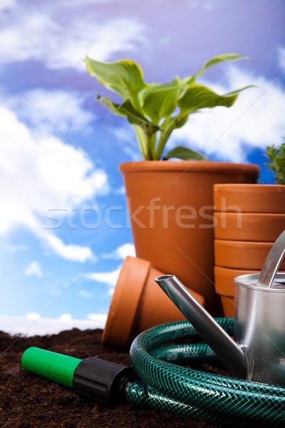 Voorjaar tuin levendig heldere gras Stockfoto © JanPietruszka