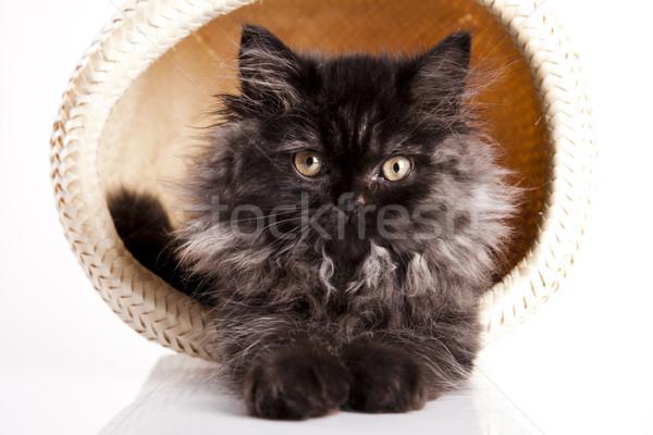 Cat Stock photo © JanPietruszka