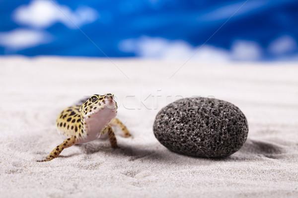 Stockfoto: Klein · gekko · reptiel · hagedis · achtergrond · lopen
