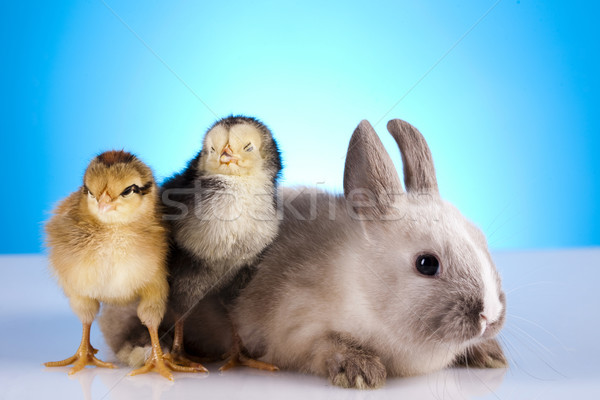 Chick vacaciones Pascua hierba funny animales Foto stock © JanPietruszka