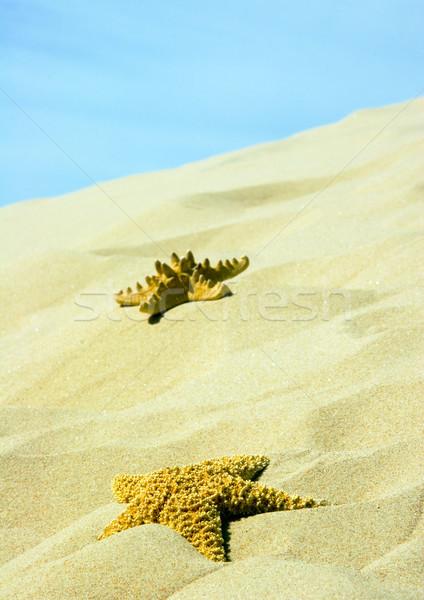 Homok merő természet gyönyörű tájkép absztrakt Stock fotó © JanPietruszka