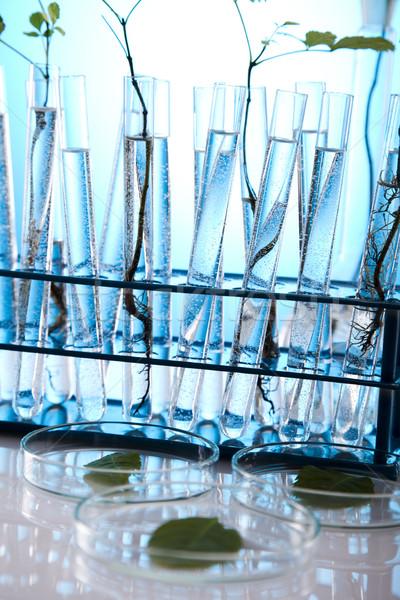 Ecologia laboratório experiência plantas natureza medicina Foto stock © JanPietruszka