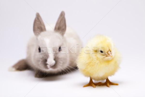 ウサギ ひよこ イースター 赤ちゃん 鳥 鶏 ストックフォト © JanPietruszka