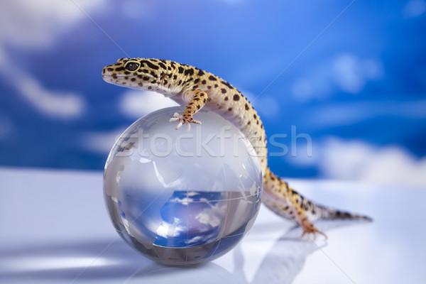 Wereldbol gekko oog lopen witte dier Stockfoto © JanPietruszka