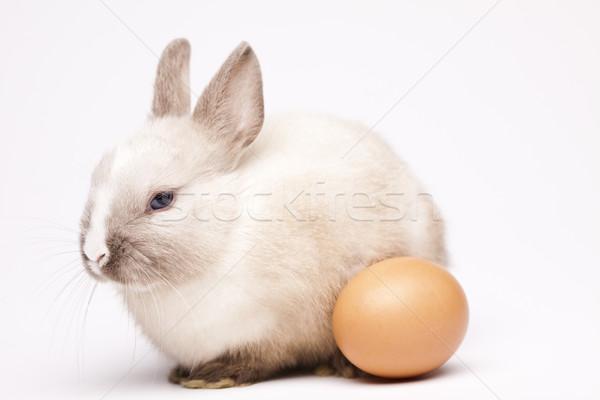 Conejo de Pascua Pascua hierba vacaciones animales funny Foto stock © JanPietruszka