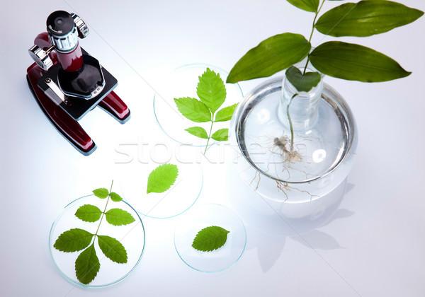 Laboratory, bio organic modern concept Stock photo © JanPietruszka