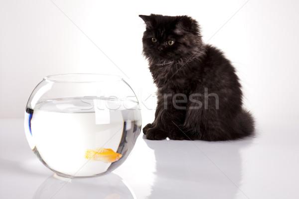 Cat and Fish Stock photo © JanPietruszka