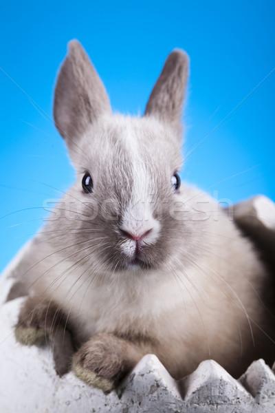 Little bunny Stock photo © JanPietruszka