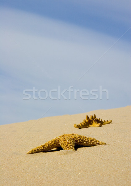 Sable pur nature belle paysage plage Photo stock © JanPietruszka