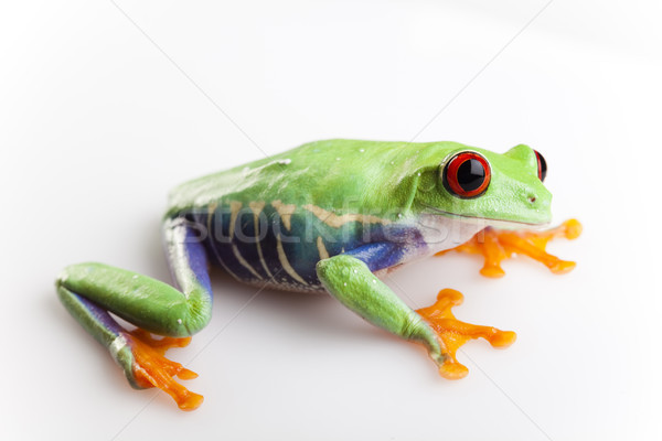 Animal, funny bright tone concept Stock photo © JanPietruszka