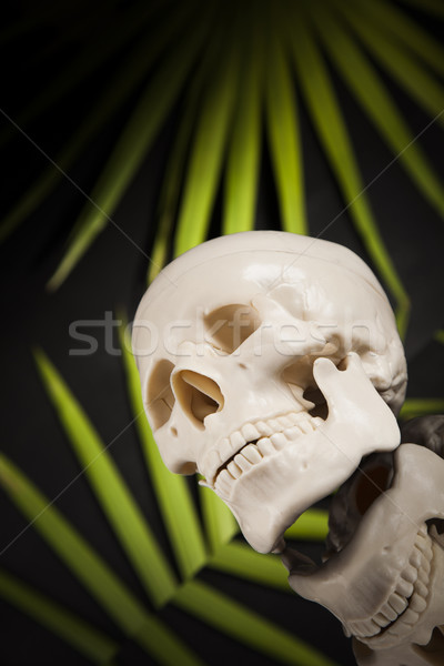 Human skull, black mirror background Stock photo © JanPietruszka
