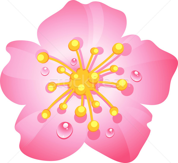 Pink cherry blossom Stock photo © jara3000
