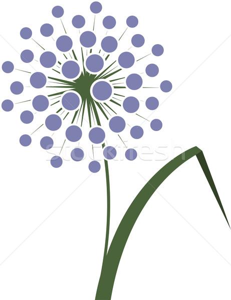 Bloem uien witte gras groene plant Stockfoto © jara3000