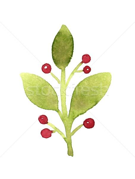 зеленый филиала красный Ягоды акварель иллюстрация Сток-фото © jara3000