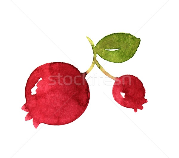Melograno frutti acquerello illustrazione foglia frutta Foto d'archivio © jara3000