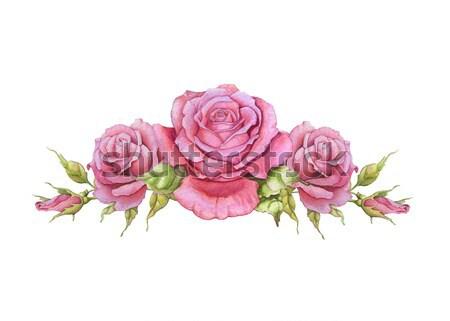 Watercolor horizontal vignette of roses Stock photo © jara3000