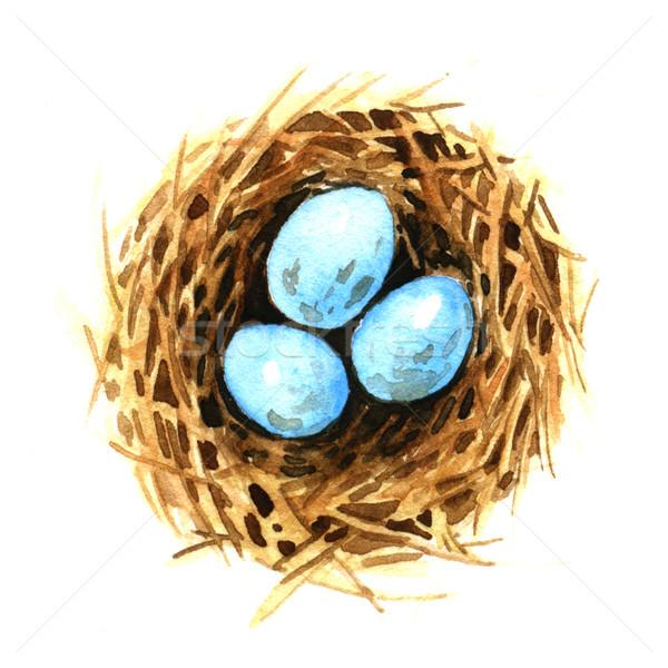 Aves ninho ovos aquarela ilustração ovo Foto stock © jara3000
