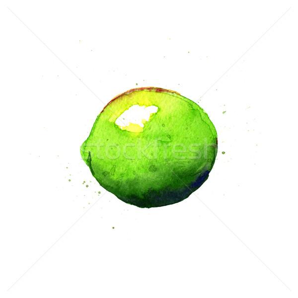 Cal aquarela ilustração branco verde cor Foto stock © jara3000