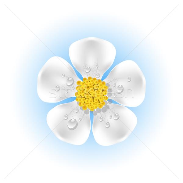 White flower with dew drops Stock photo © jara3000