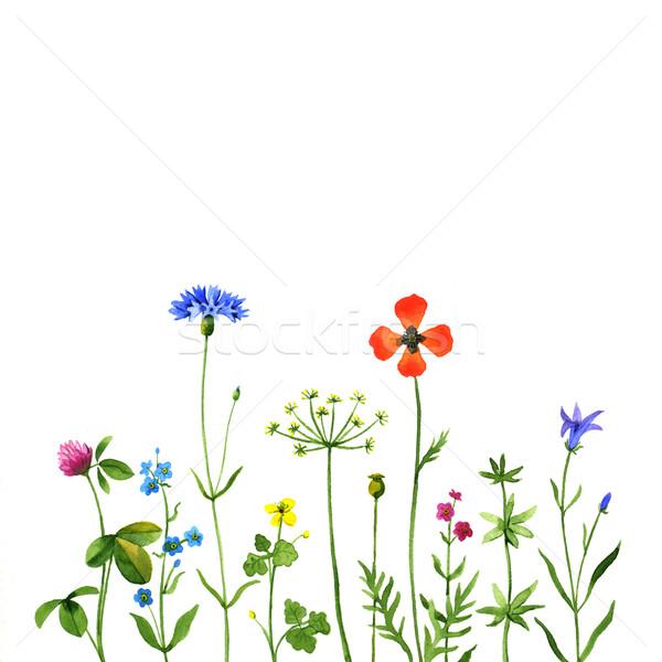 Vadvirágok vad virágok fehér vízfesték illusztráció természet Stock fotó © jara3000
