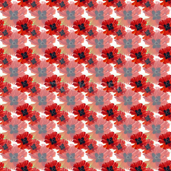 Acquerello papaveri rosso fiori carta Foto d'archivio © jara3000