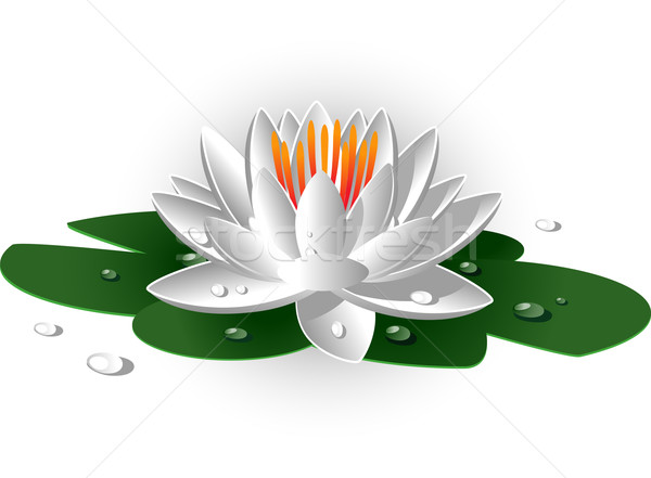 White waterlily Stock photo © jara3000