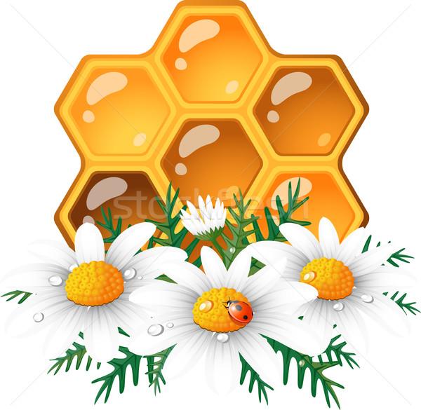 A nido d'ape Daisy bianco eps 10 design Foto d'archivio © jara3000
