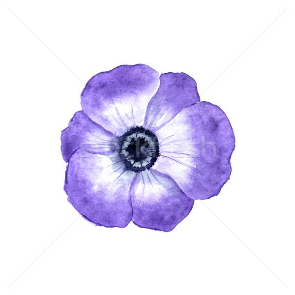 Flor aquarela primavera natureza azul cor Foto stock © jara3000