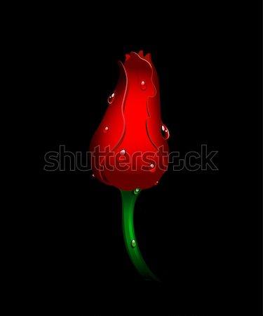 Bella rosso tulipano nero isolato eps Foto d'archivio © jara3000