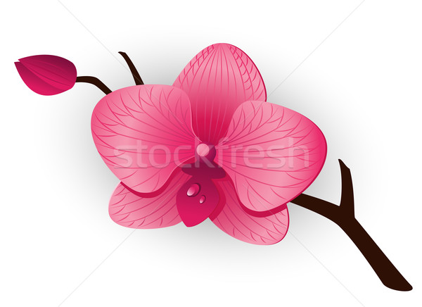 Beautiful pink Orchid Stock photo © jara3000