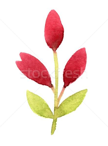 Ramo rosa flores flor-de-rosa aquarela folha Foto stock © jara3000