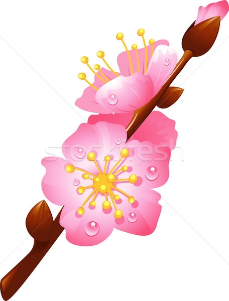branch of cherry blossoms Stock photo © jara3000