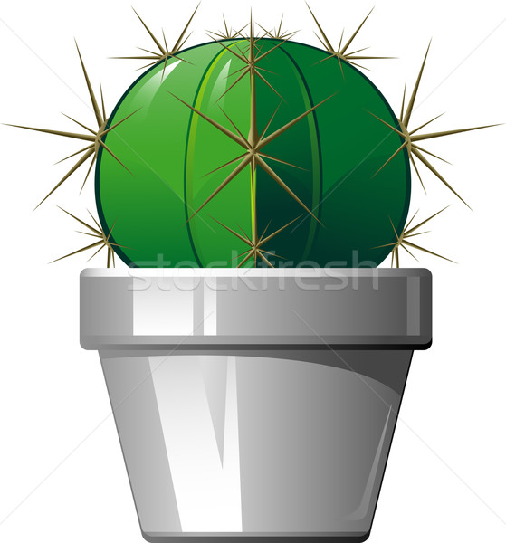 Cactus in a pot Stock photo © jara3000