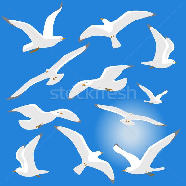 Seagulls isolated on blue background Stock photo © jara3000