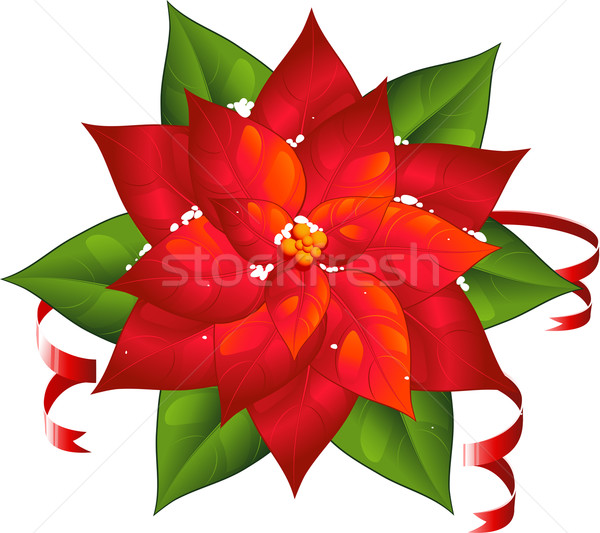 Poinsettia Stock photo © jara3000