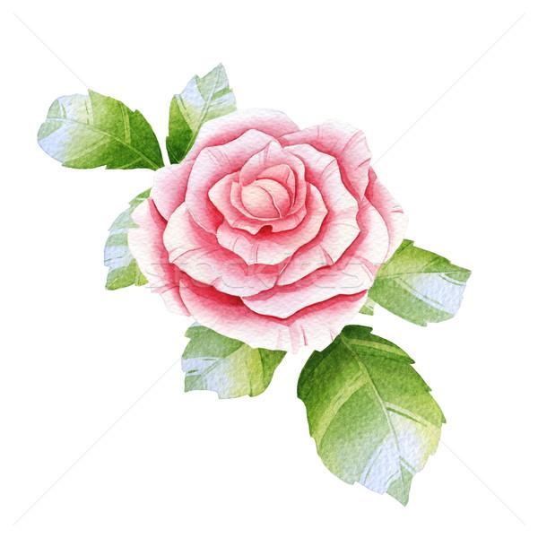 Rosa acquerello rosa bianco fiore foglia Foto d'archivio © jara3000