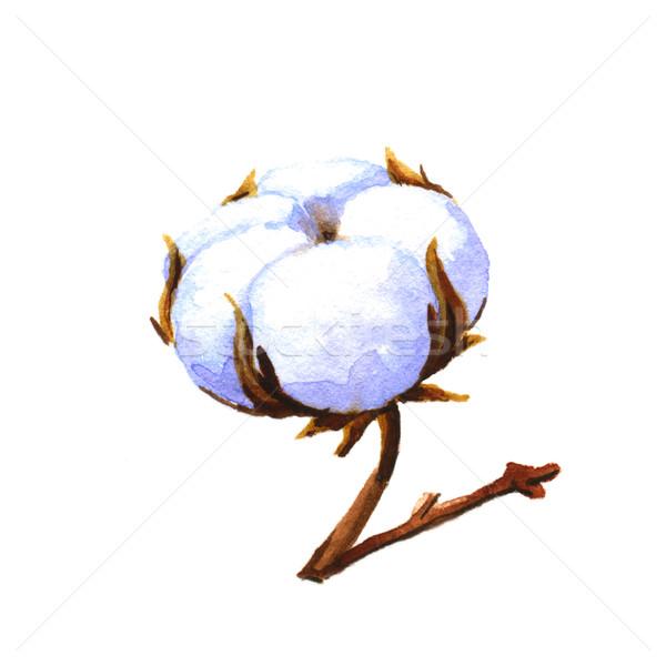 Cotton boll Stock photo © jara3000