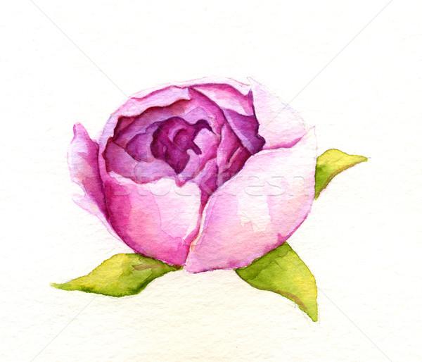 Fiore acquerello illustrazione rosa foglia giardino Foto d'archivio © jara3000