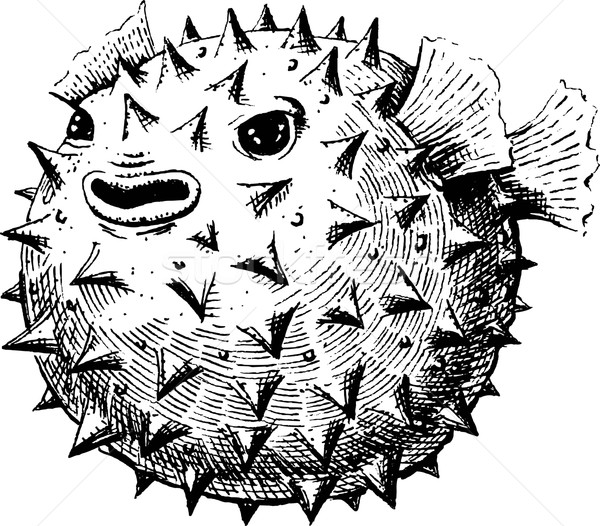 Blowfish Stock photo © jara3000