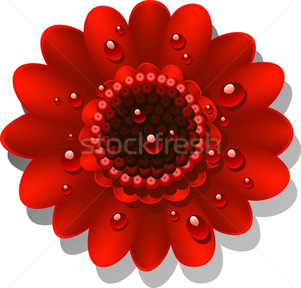 Bella rosso Daisy rugiada gocce eps Foto d'archivio © jara3000