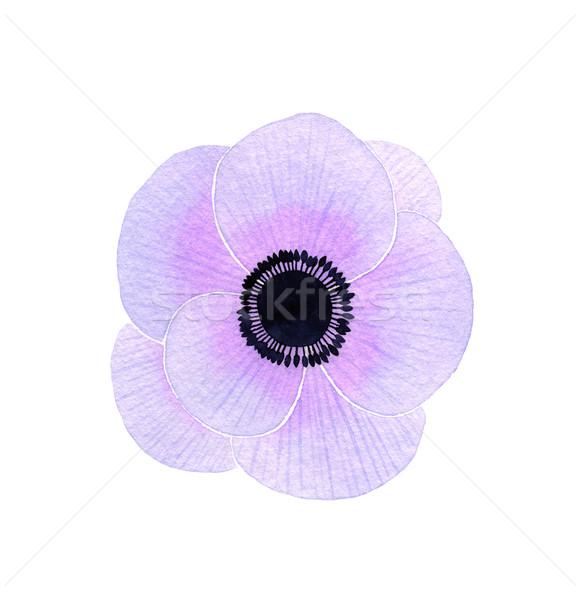 Fleur couleur pour aquarelle printemps nature beauté art Photo stock © jara3000